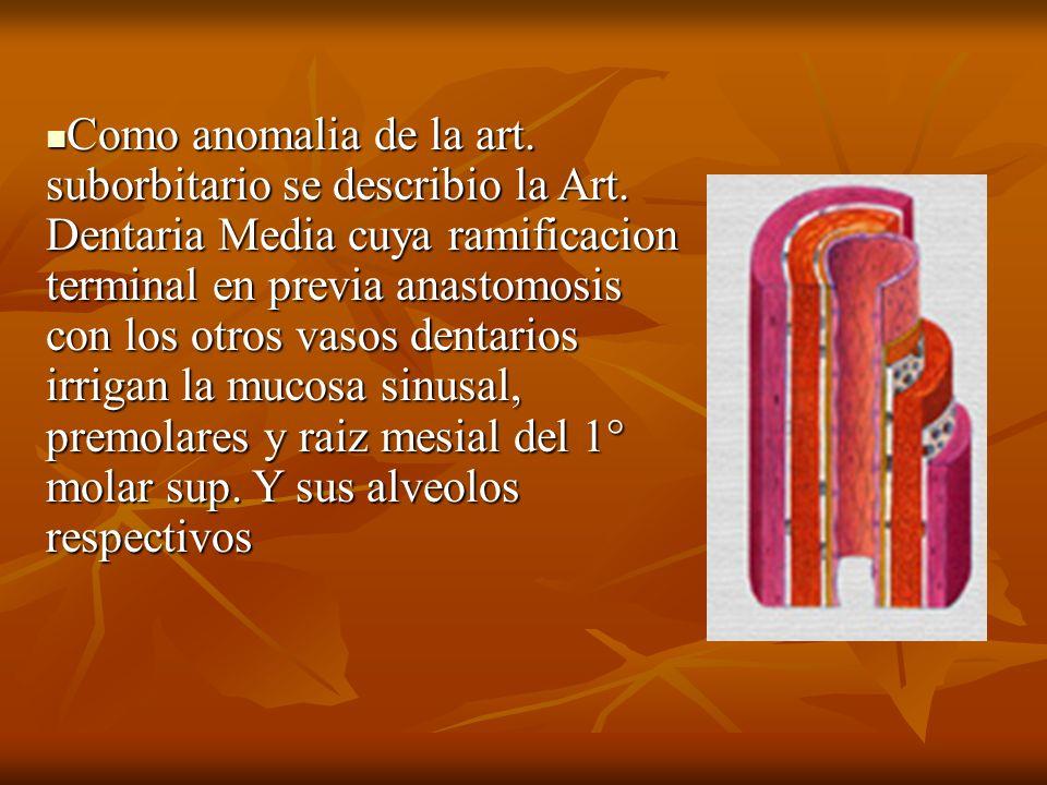 Como anomalia de la art. suborbitario se describio la Art
