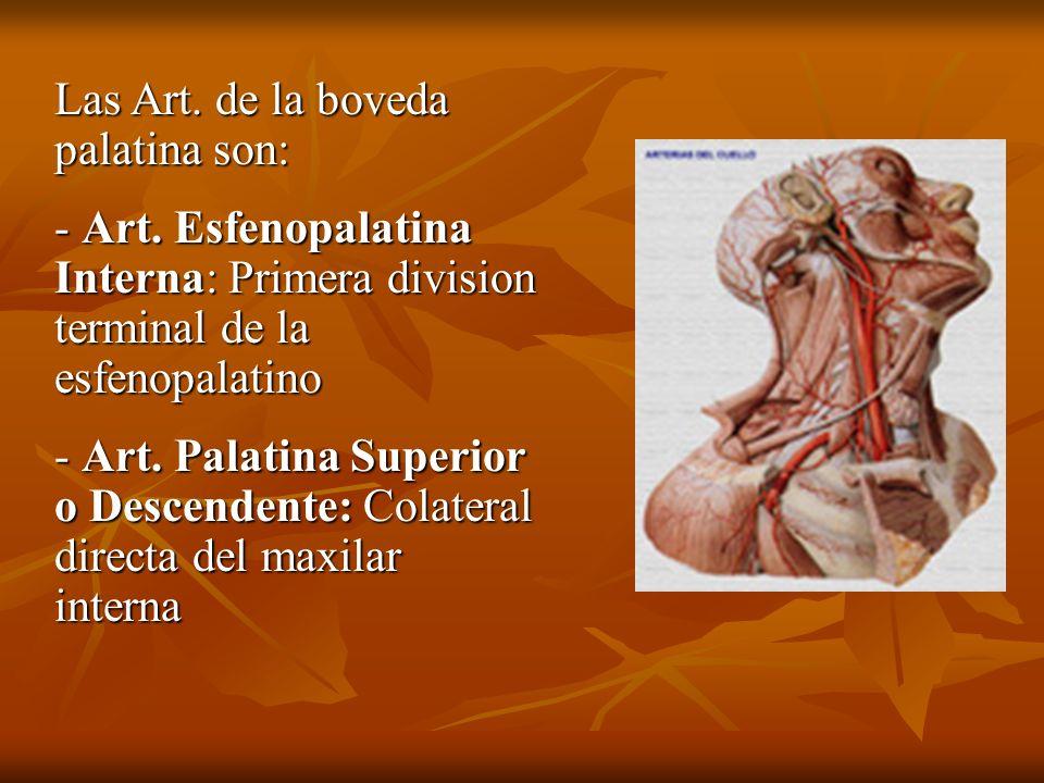 Las Art. de la boveda palatina son: