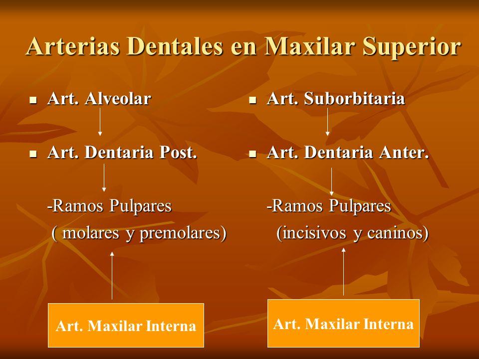 Arterias Dentales en Maxilar Superior