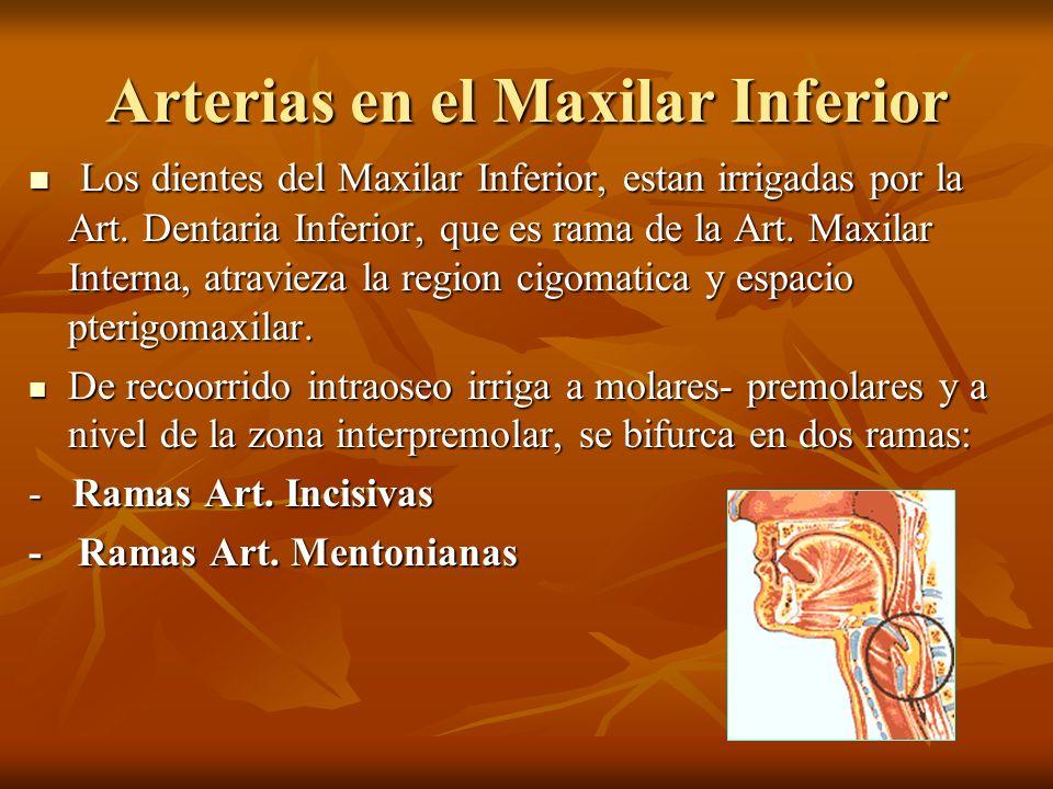Arterias en el Maxilar Inferior