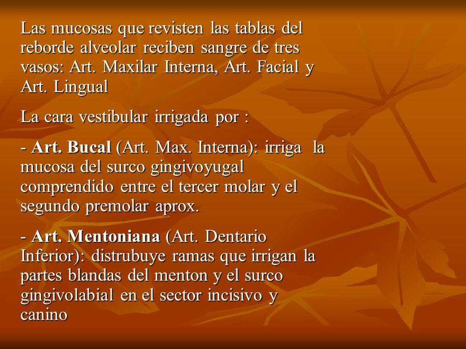 Las mucosas que revisten las tablas del reborde alveolar reciben sangre de tres vasos: Art. Maxilar Interna, Art. Facial y Art. Lingual