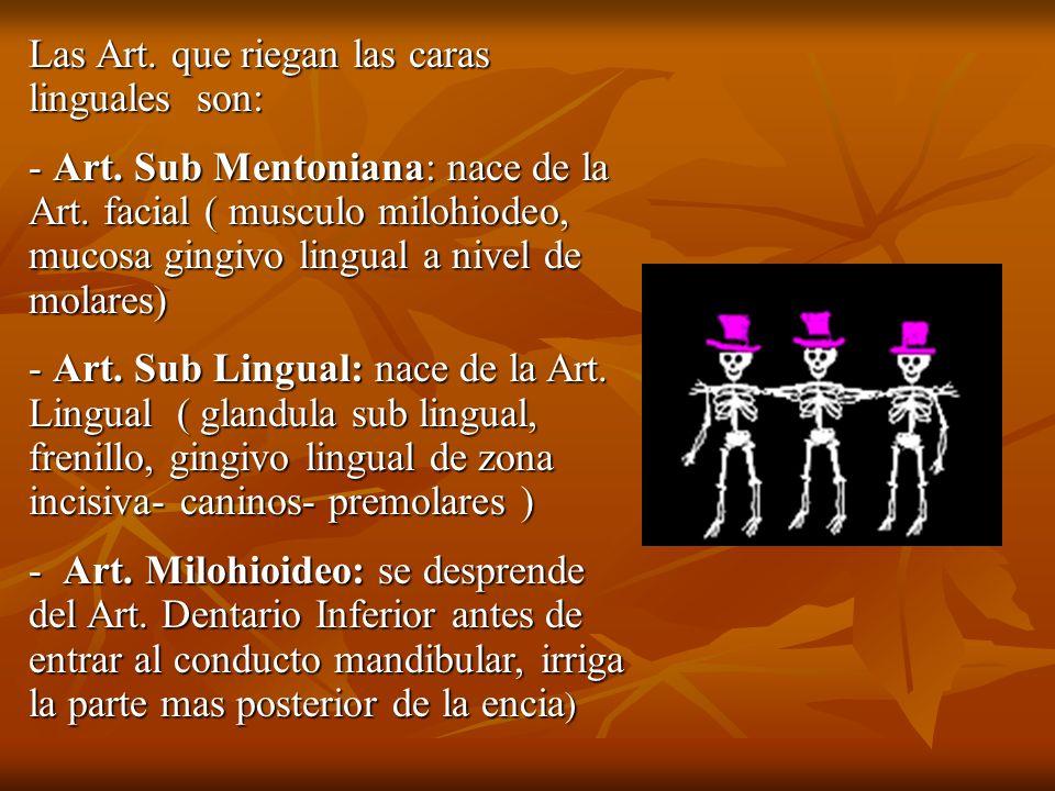 Las Art. que riegan las caras linguales son: