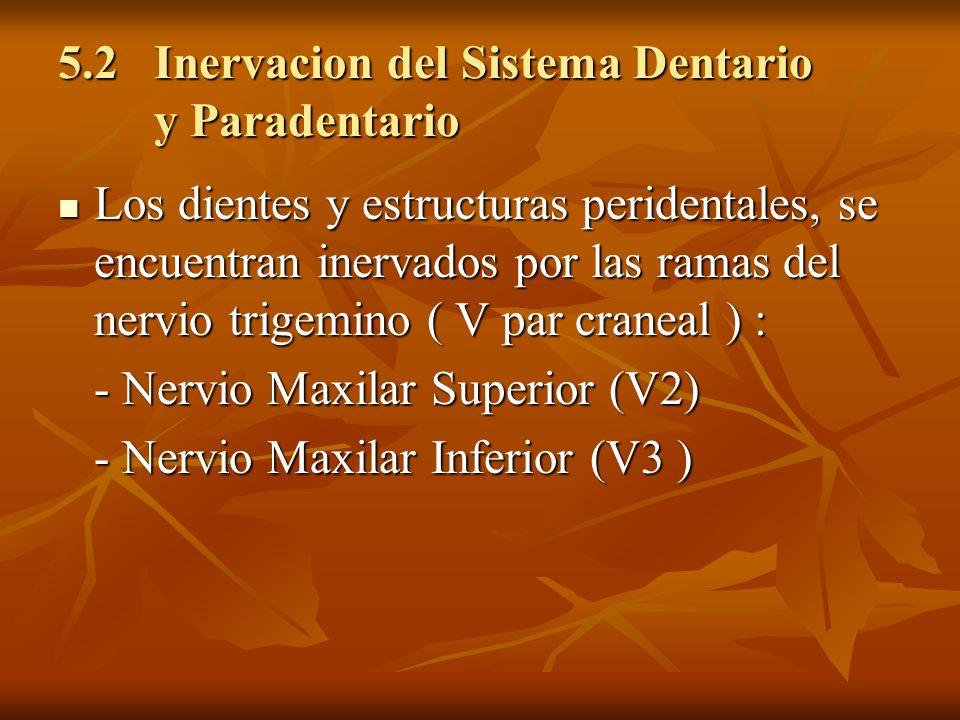 5.2 Inervacion del Sistema Dentario y Paradentario