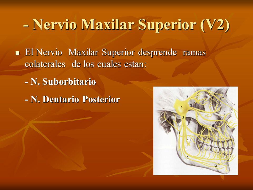 - Nervio Maxilar Superior (V2)