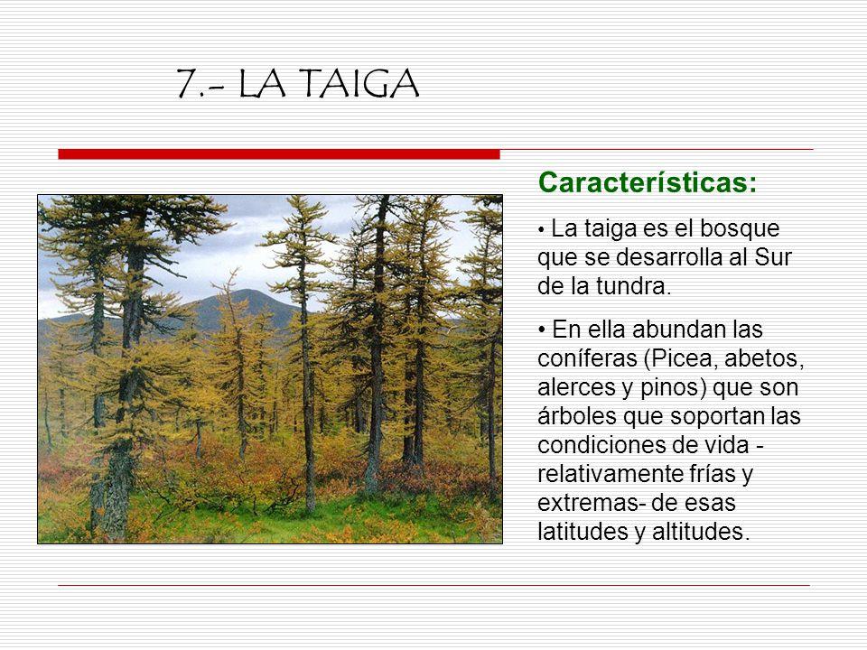 Ngel encinas barcenilla ppt video online descargar for Las caracteristicas de los arboles