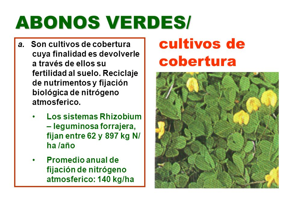 cultivos de cobertura ABONOS VERDES/