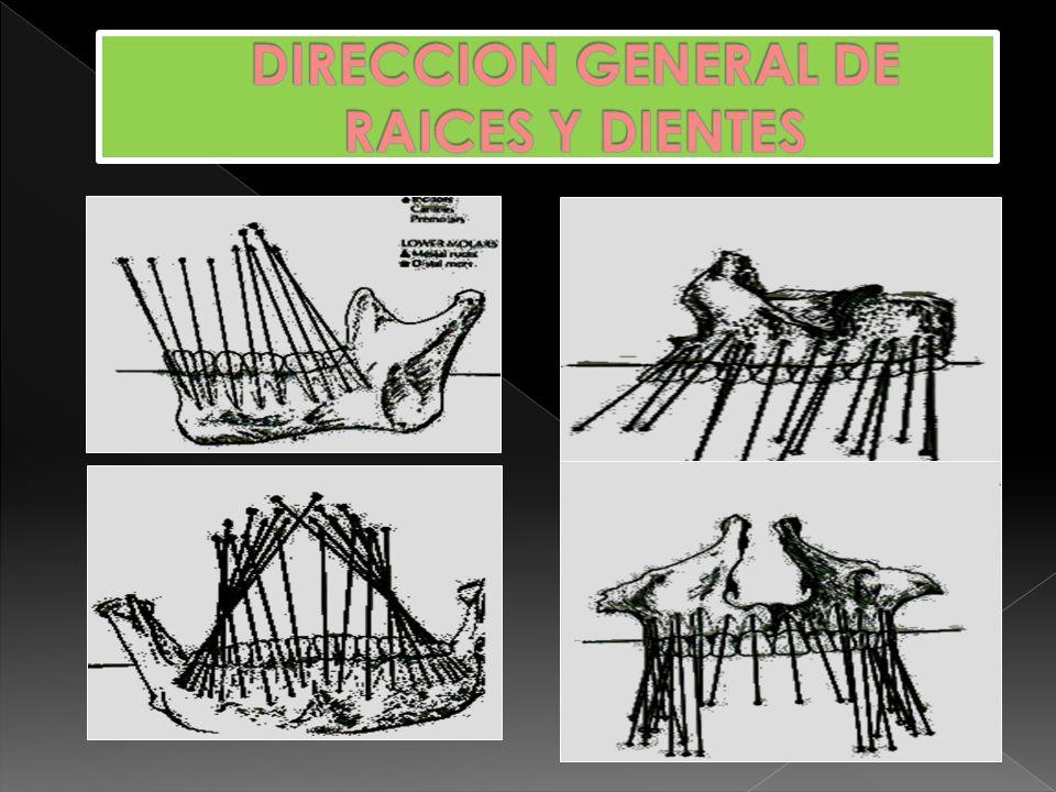 DIRECCION GENERAL DE RAICES Y DIENTES