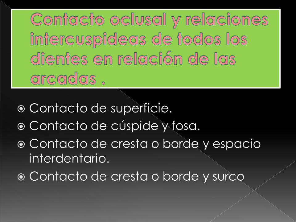 Contacto oclusal y relaciones intercuspideas de todos los dientes en relación de las arcadas .