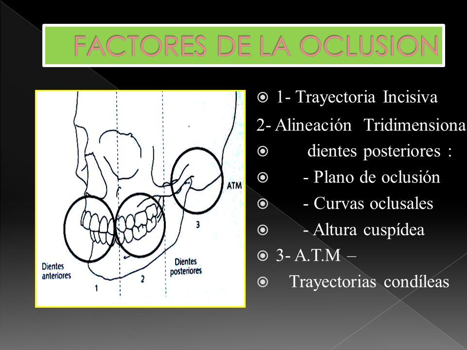 FACTORES DE LA OCLUSION
