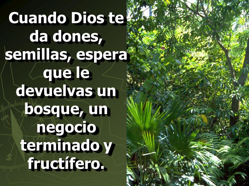Cuando Dios te da dones, semillas, espera que le devuelvas un bosque, un negocio terminado y fructífero.