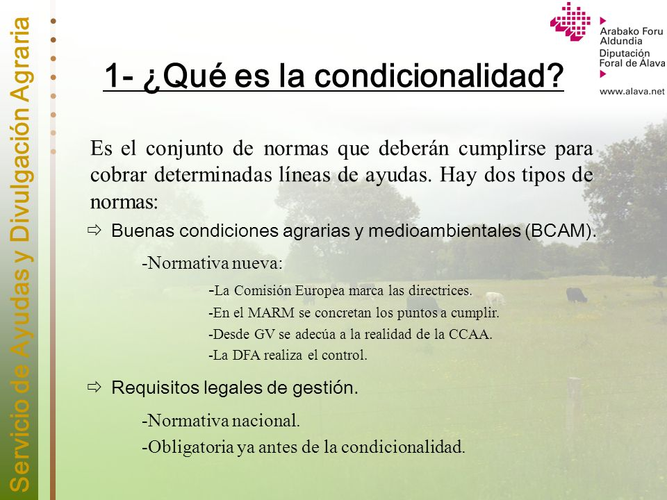 1- ¿Qué es la condicionalidad