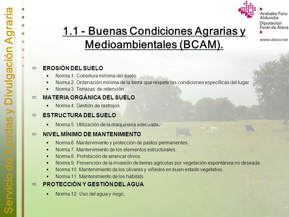 1.1 - Buenas Condiciones Agrarias y Medioambientales (BCAM).