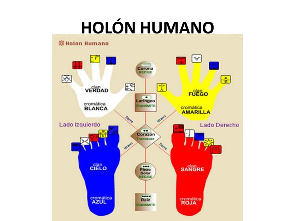HOLÓN HUMANO