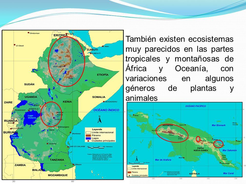 También existen ecosistemas muy parecidos en las partes tropicales y montañosas de África y Oceanía, con variaciones en algunos géneros de plantas y animales
