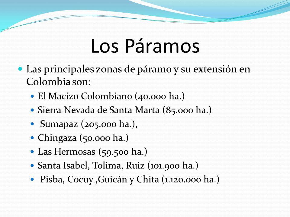 Los Páramos Las principales zonas de páramo y su extensión en Colombia son: El Macizo Colombiano (40.000 ha.)