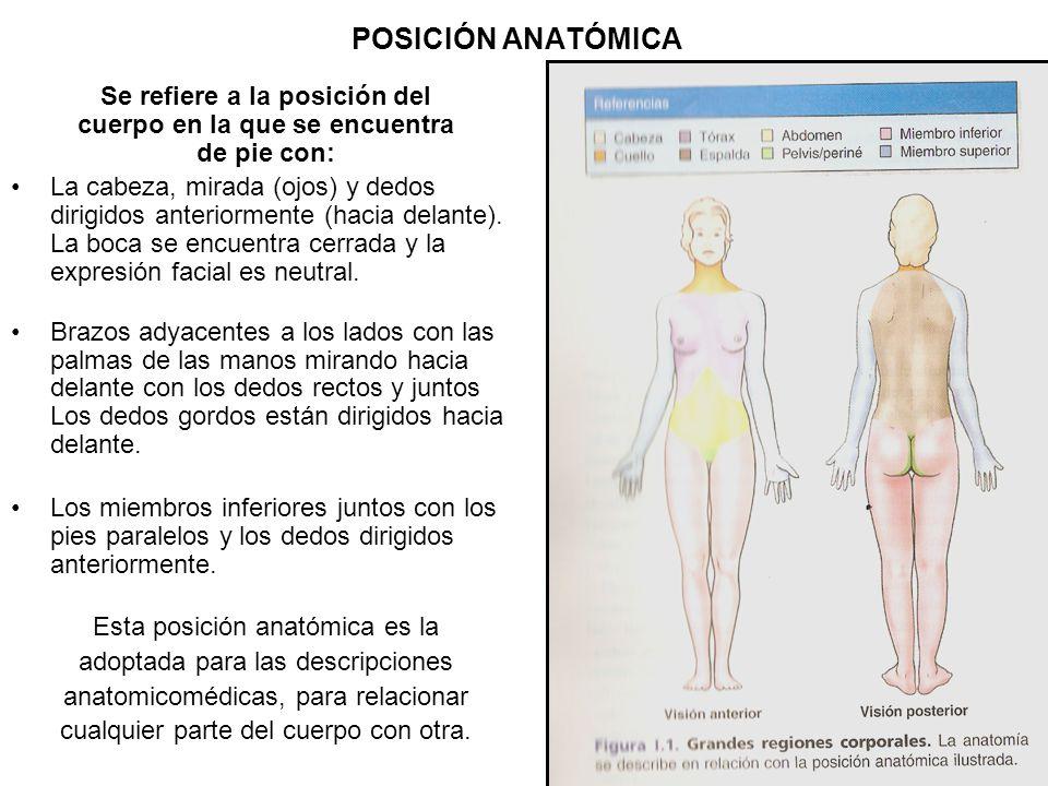 Lujo Miembro Inferior Anatomía Del Esqueleto Componente - Anatomía ...