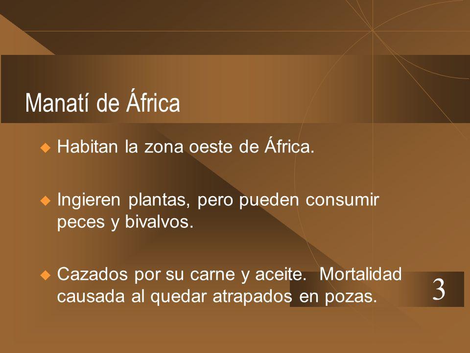 3 Manatí de África Habitan la zona oeste de África.