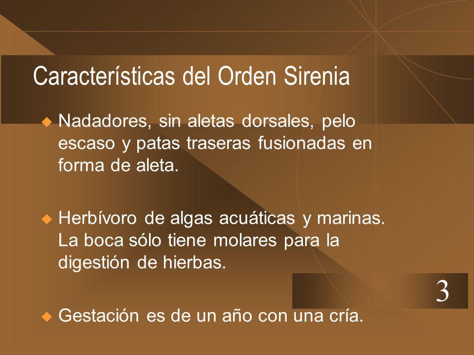 Características del Orden Sirenia