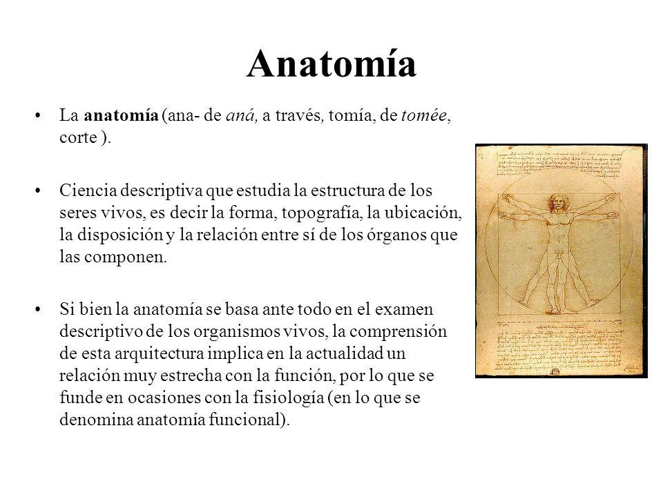 Lujoso Lo Que Es Anatomi Colección - Imágenes de Anatomía Humana ...