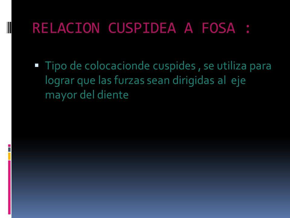 RELACION CUSPIDEA A FOSA :
