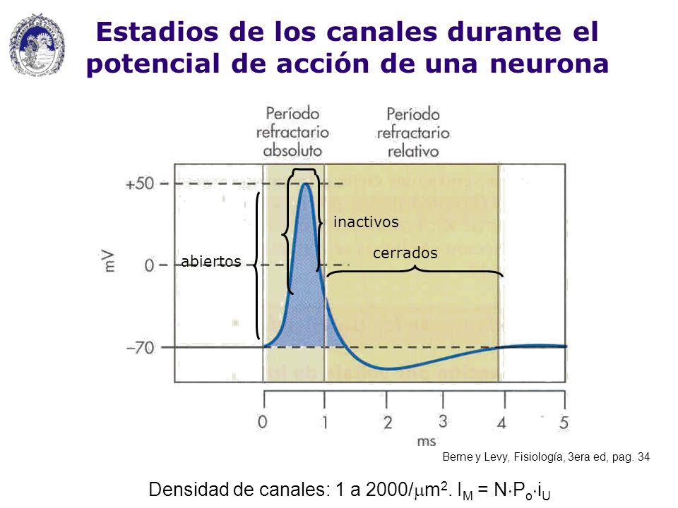 Estadios de los canales durante el potencial de acción de una neurona