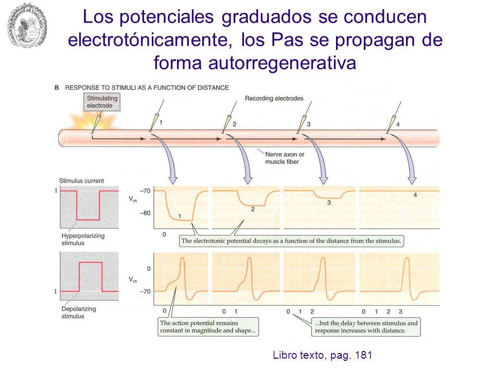 Los potenciales graduados se conducen electrotónicamente, los Pas se propagan de forma autorregenerativa