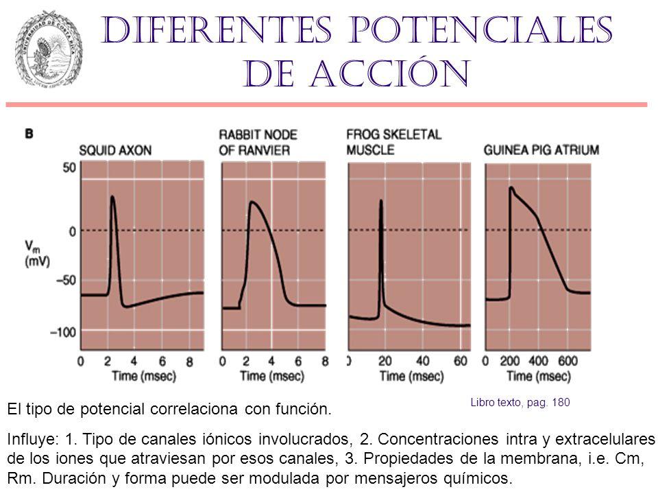 Diferentes potenciales de acción