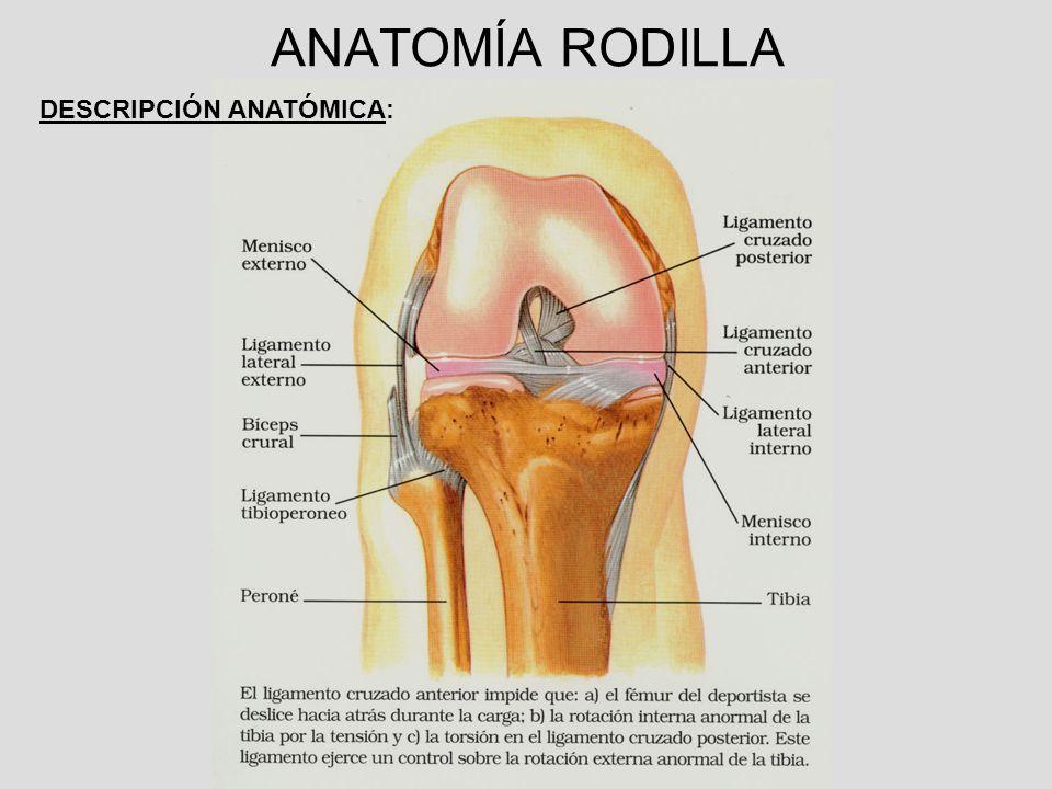 Increíble Anatomía De La Rodilla Conjunta Ppt Ideas - Anatomía de ...