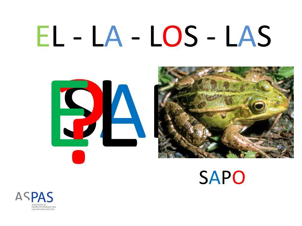 EL - LA - LOS - LAS EL SAPO SAPO