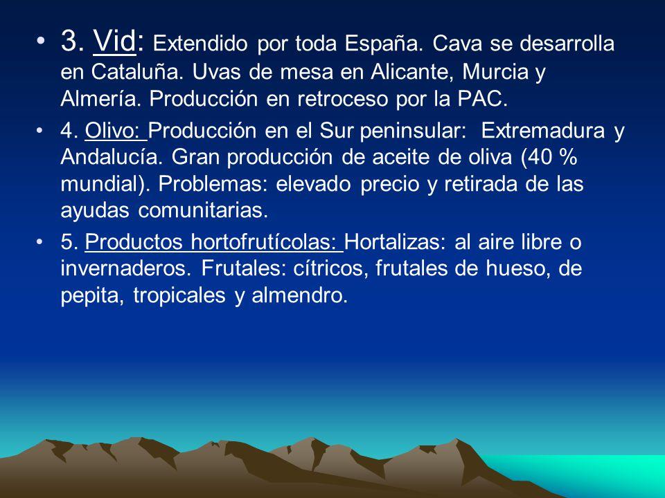 3. Vid: Extendido por toda España. Cava se desarrolla en Cataluña