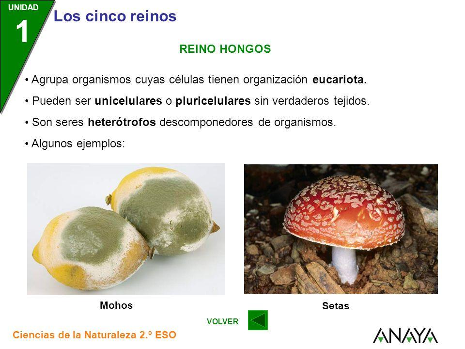 • Agrupa organismos cuyas células tienen organización eucariota.