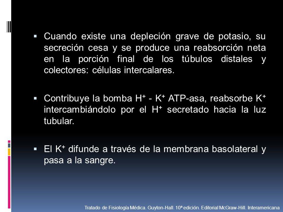 El K+ difunde a través de la membrana basolateral y pasa a la sangre.