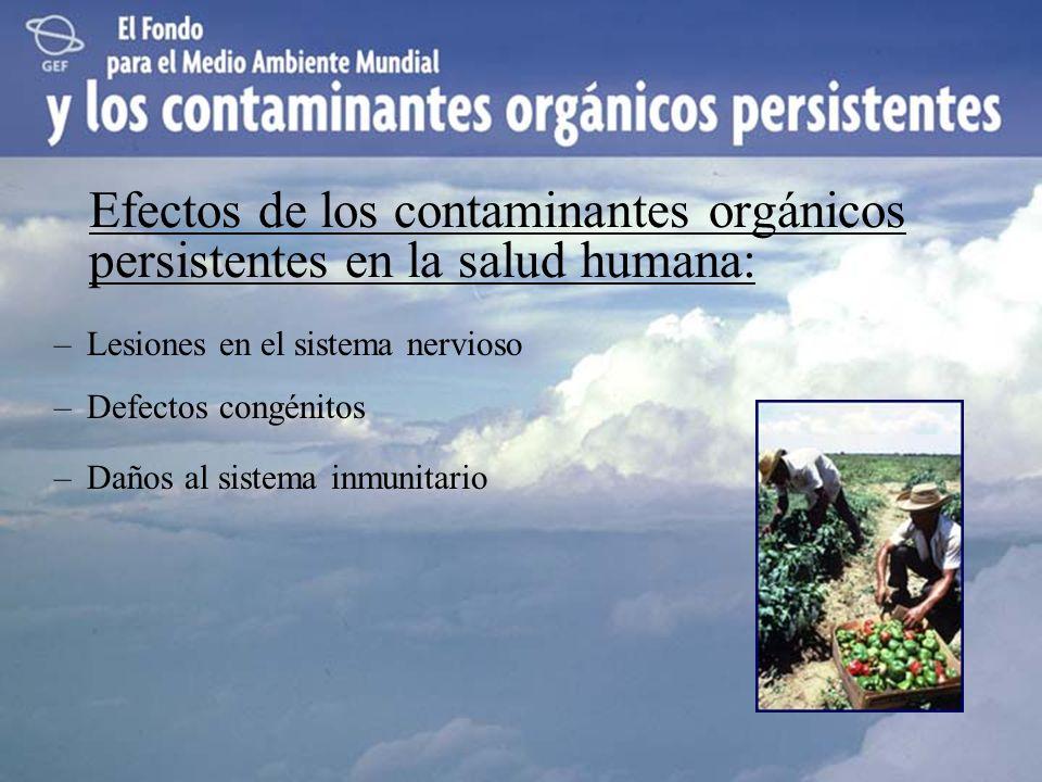Efectos de los contaminantes orgánicos persistentes en la salud humana:
