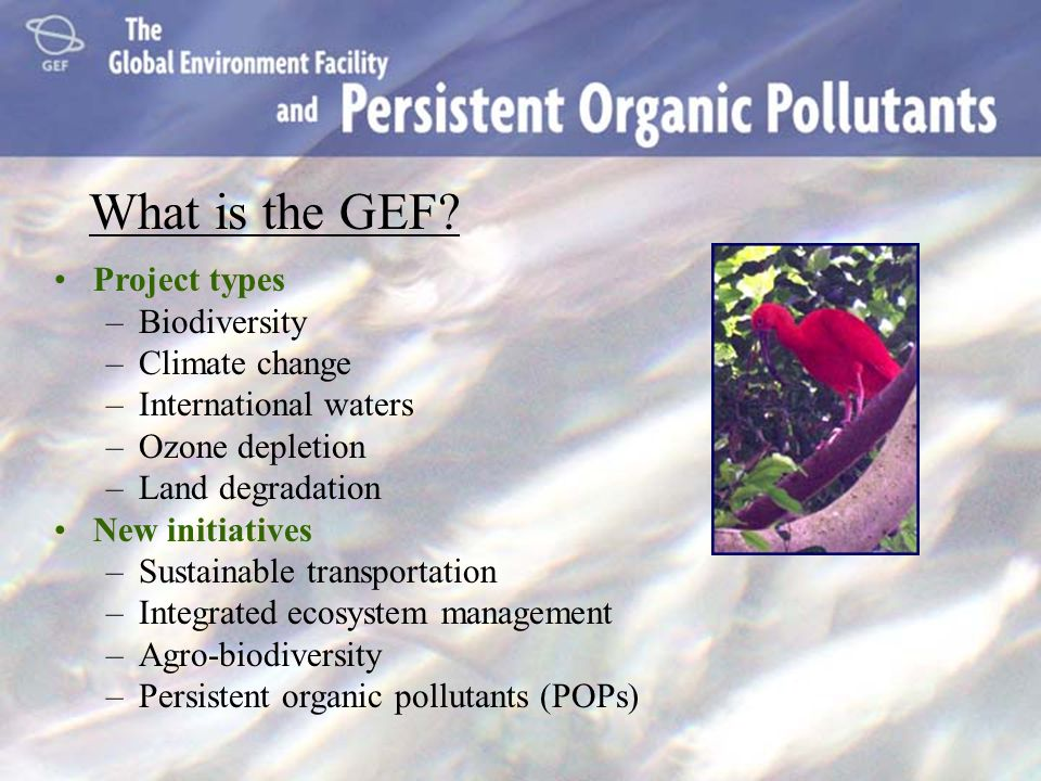 What is the GEF Project types Biodiversity Climate change
