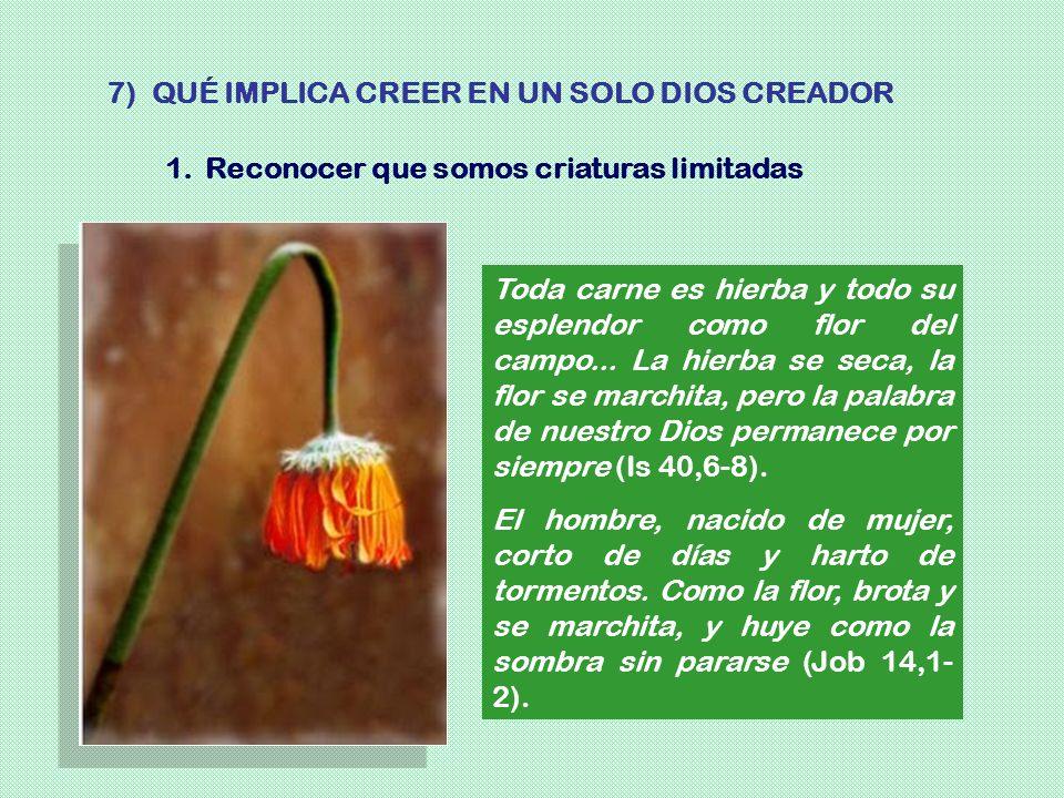7) QUÉ IMPLICA CREER EN UN SOLO DIOS CREADOR