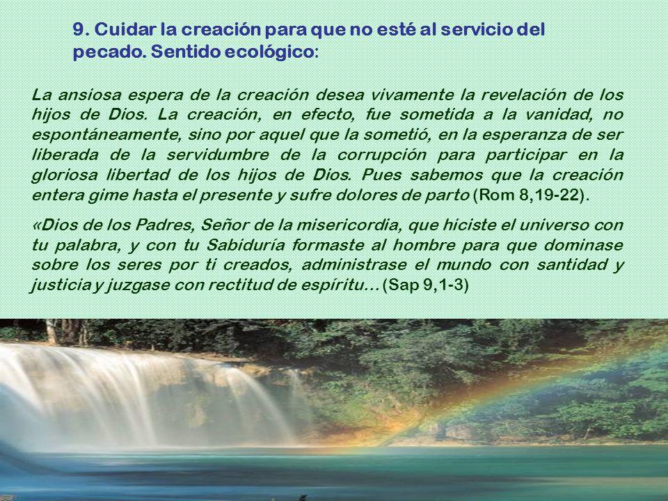 9. Cuidar la creación para que no esté al servicio del pecado