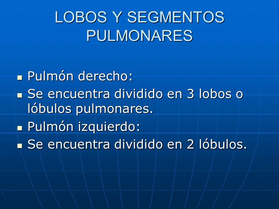 LOBOS Y SEGMENTOS PULMONARES