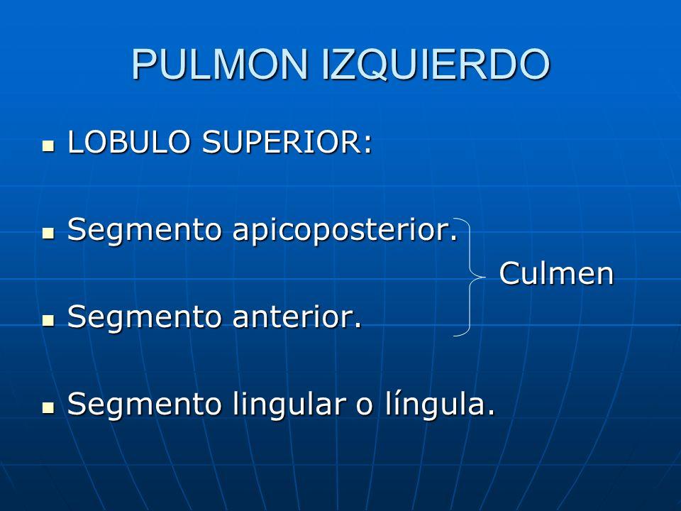 PULMON IZQUIERDO LOBULO SUPERIOR: Segmento apicoposterior. Culmen