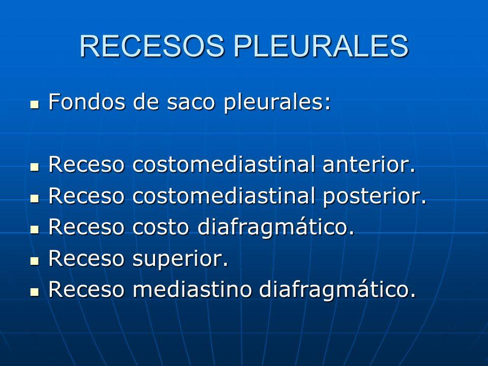 RECESOS PLEURALES Fondos de saco pleurales: