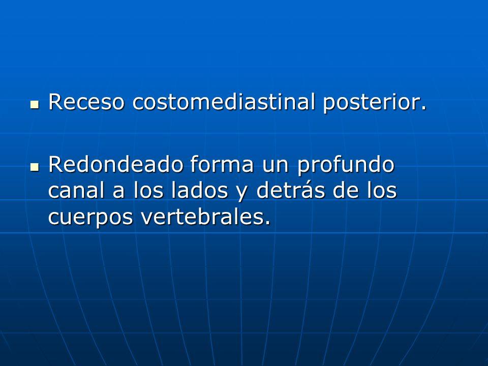 Receso costomediastinal posterior.