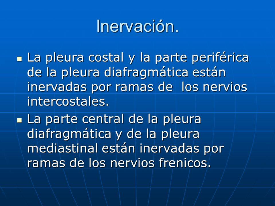 Inervación. La pleura costal y la parte periférica de la pleura diafragmática están inervadas por ramas de los nervios intercostales.