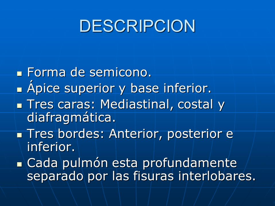 DESCRIPCION Forma de semicono. Ápice superior y base inferior.