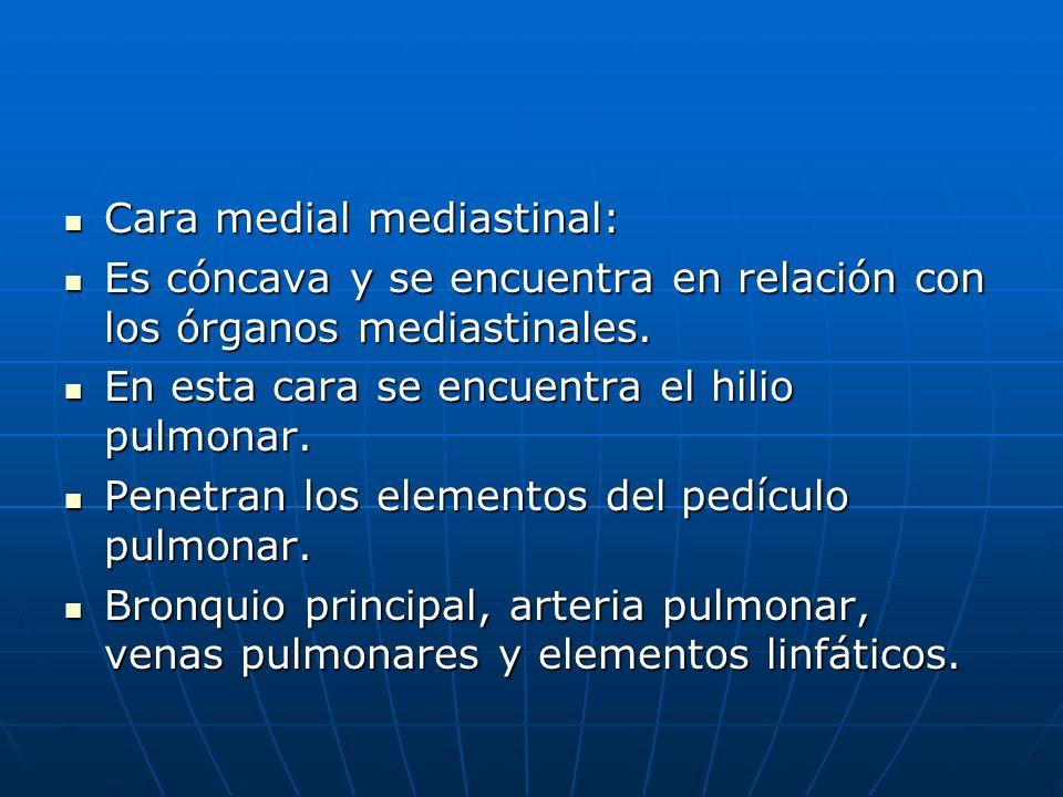 Cara medial mediastinal: