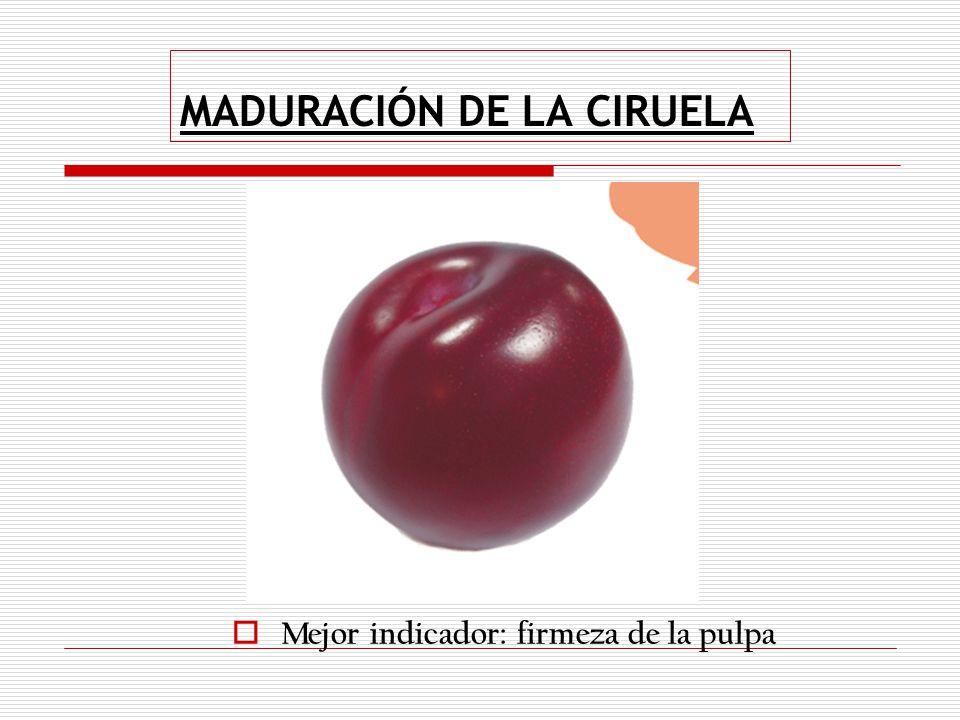 Acondicionamiento de frutas y hortalizas ppt descargar for Ciruela santa rosa