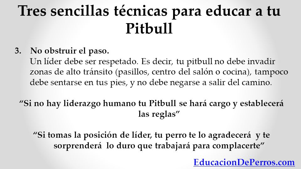 Tres sencillas técnicas para educar a tu Pitbull
