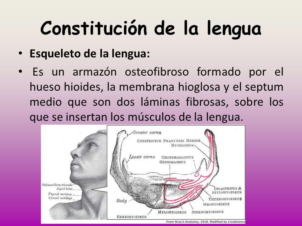 Constitución de la lengua
