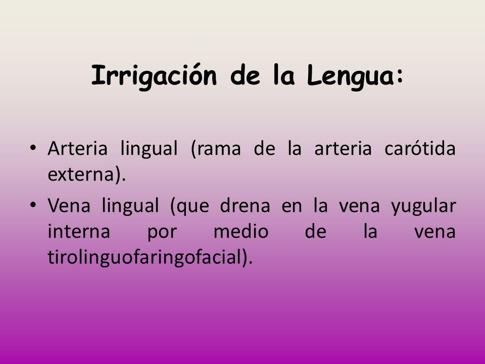 Irrigación de la Lengua: