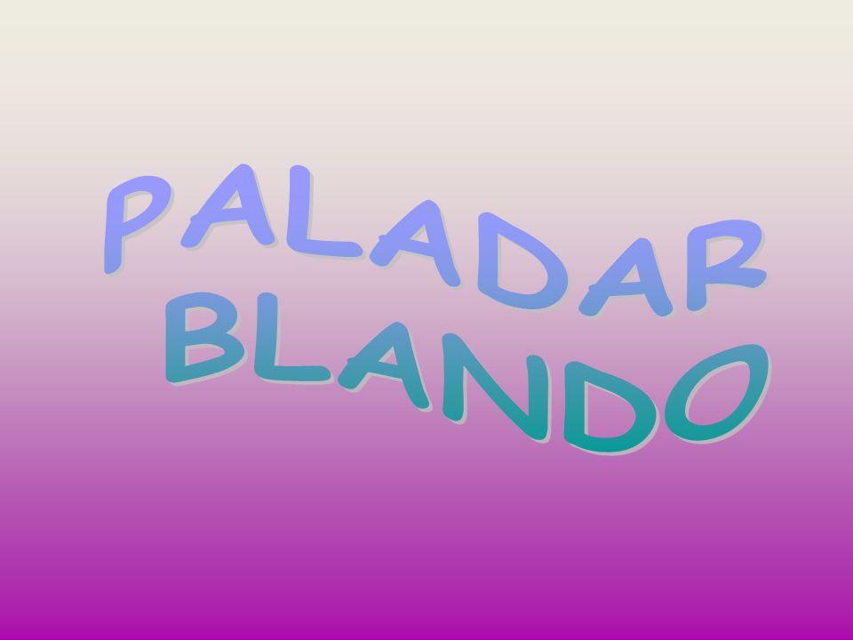 PALADAR BLANDO