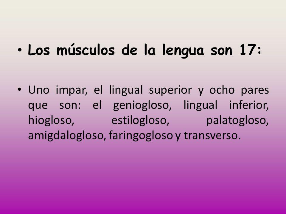 Los músculos de la lengua son 17: