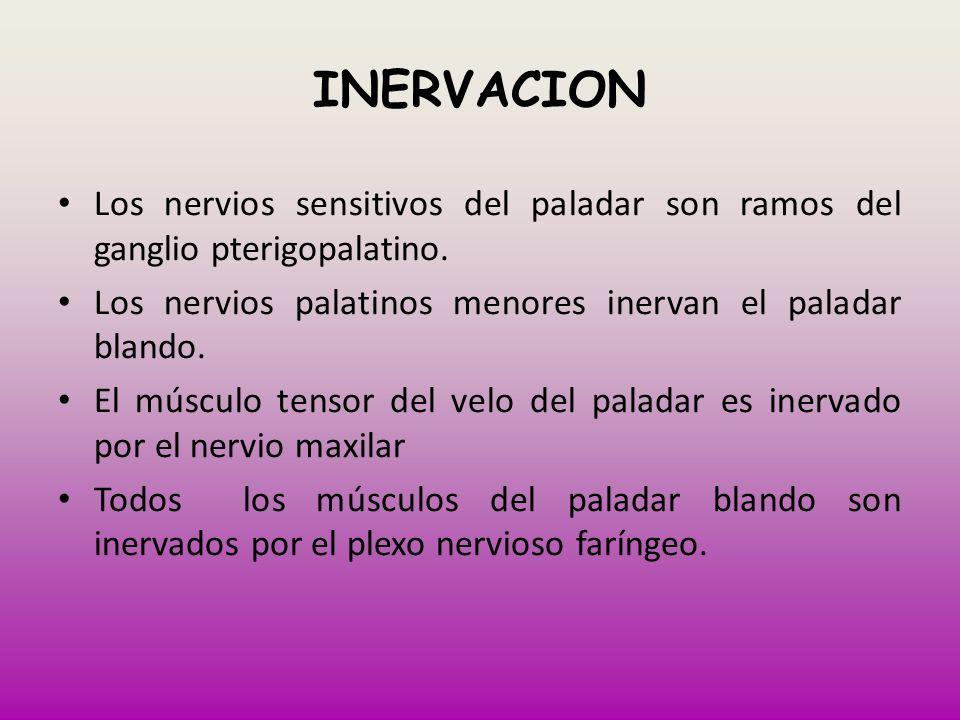 INERVACION Los nervios sensitivos del paladar son ramos del ganglio pterigopalatino. Los nervios palatinos menores inervan el paladar blando.
